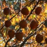 『柿の実色の日々』の画像
