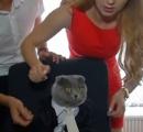 ルーマニアの会社が通信部門の主管として猫を起用(画像あり)