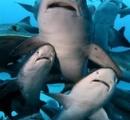 サメ30匹出現の海水浴場、21日から遊泳許可。海水浴客「監視してるし大丈夫と聞いたので手前で遊びます」茨城県日立市
