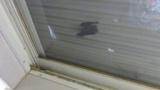 コウモリが雨戸と網戸の間に挟まったwwwwww