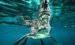 水中から近距離で撮影されたワニの迫力が凄すぎるwww