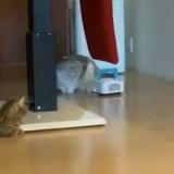 お掃除ロボットに戸惑う指原莉乃の猫がかわいいwww