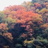 『.me近くの秋探索』の画像