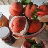 『桃をもぐ』の画像