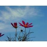 『秋は穏やかに』の画像