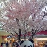 『ああ上野駅』の画像