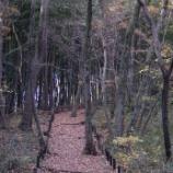 『東大和の終わのり秋』の画像