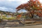 紅葉が少しづつ始まってきてる!平野部ではちらほらと紅葉。山間部はどうでしょう?~