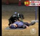 訓練士のおなかで ぴょん!警察犬「ポンチョ君」が心臓マッサージ あまりの可愛さに人気沸騰