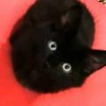 子ネコが「加湿器」のミストを気にしていた。わしゃわしゃ♪ → 私にもこうします…