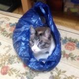 袋の猫のサムネイル