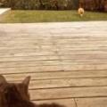 ネコが庭の隅からゆっくりこっちにやってくる。…ど、ドアを早くあけてぇ → うちの猫はこんな顔になった…