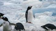 世界でも最もコロナ対策に成功している南極を日本も見習うべき