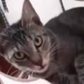 そこはネコたちに人気の優良物件。上から下まで今日も満室だ! → 脚立の猫マンションはこんな感じ…
