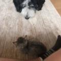 新入り子ネコに先住犬が近づいた。よろしくね、ちょんっ♪ → 犬はこうした…