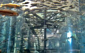 「美しい階段」がある水族館