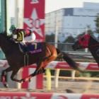 『ワンミリオンスが3連勝で重賞初制覇/TCK女王盃・大井』の画像