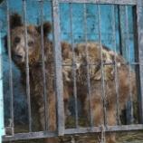 『SOS:アルメニアのクマとライオンたち』の画像