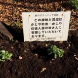 『戸田市五差路そばのかじや町花壇で花の植え替えをやりました』の画像