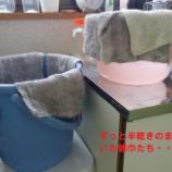 『【ながさき】この時期の衛生管理』の画像