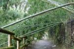 ハヤブサとカワセミと、ハヤブサを見に行く途中の竹のトンネル【Photo by 草ちゃん】