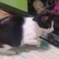 ネコが「おもちゃ」を狙っていた。フリフリ くねくね♪ → ベッドの上でこうなります…