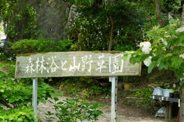 高天山草園で春のお花【2018】