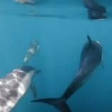 『地球の海には イルカがよく似合う』の画像