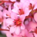 『いっぱい咲いた今日の庭』の画像