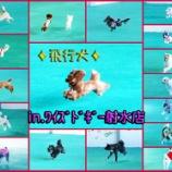 『待ちに待った!飛行犬撮影会!!!』の画像