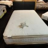 『【セール ベッド売場改装投売セール 2012夏】サータ社のイリノイ505フレームにパーフェクトスリーパー2トップ・SD』の画像