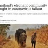 『コロナで飢餓に瀕したタイのゾウたち』の画像