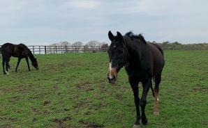 放牧地で馬にニンジンをあげない理由