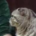ネコがちらっと私を見た。ここ、いいですか? → 猫はそっとこうなった…