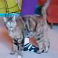 【ネコ】 外出禁止中なので、バレエの先生がオンラインでレッスンをする。ここで脚をあげてぇ♪ → 猫はこうなった…