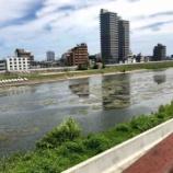 『大人な夏休みの自由研究「広瀬川のしっぽを探せ」 その1』の画像