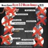 『2015年に米国政府が「駆除」した野生動物たち』の画像