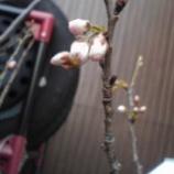 『春一番。』の画像