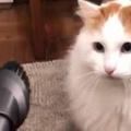 ネコに「掃除機」を近づけてみた。どうなるの? → この世界には2種類の猫がいるようです…