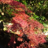 『'2012紅葉狩り🍁【京都】④日本の道百選:哲学の道』の画像