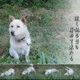 『愛犬ロッキー』の画像