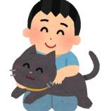 『保護した猫が来てから半年』の画像