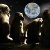 サルの脳に人間の遺伝子を移植した結果・・・・