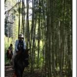 『乗馬体験後の身体の変化』の画像