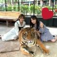 チーム8メンバー、タイでトラと一緒に写真を撮る