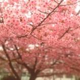 『朝顔は桜になれるのか? vol.2495』の画像