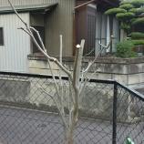 『落ち葉の処理大丈夫ですか?桑名・いなべでの木々の伐採はお任せください!』の画像