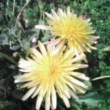 『花は旬に限る!』の画像