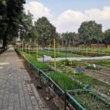 『【インド】日本野菜が購入できるStrawberry Farm Sultanpur』の画像