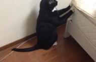 うちの猫があほ可愛すぎるwwwwwwww